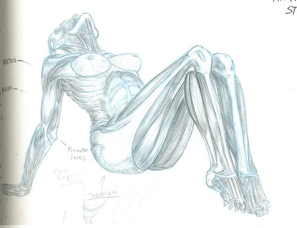 Jeno barcsay anatomy for the artist